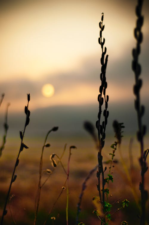 Immagine gratuita di impianti, impianto, natura, tramonto