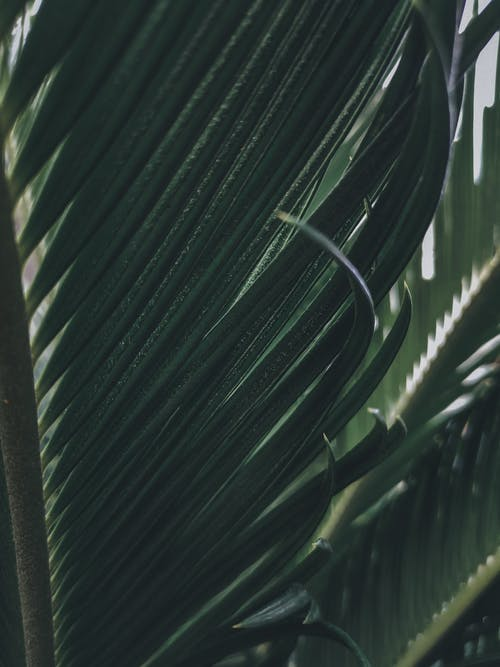 Green leaves of tropical plant in garden