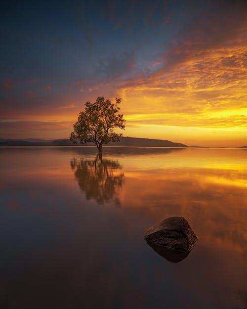 Foto stok gratis danau, matahari terbenam, pohon