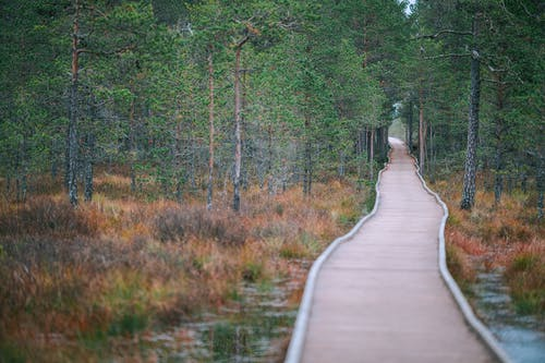 Empty pathway in evergreen forest in autumn