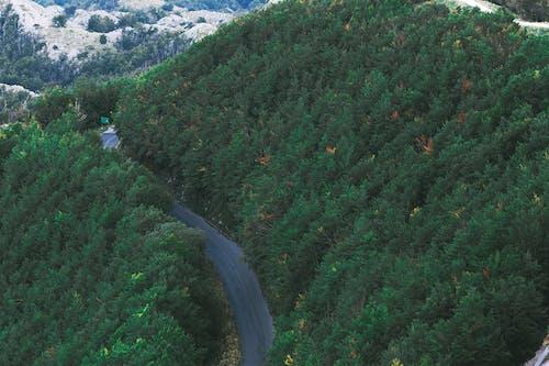 Carreggiata Stretta Tra Lussureggianti Alberi Verdi Che Crescono Nella Valle Montuosa