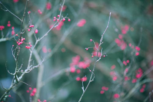 Delicate small red berries on thin leafless tree branches growing in forest on misty day