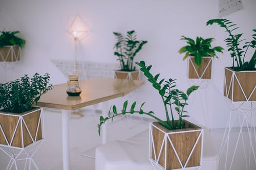 Interior of creative cafe with various potted houseplants and wooden table