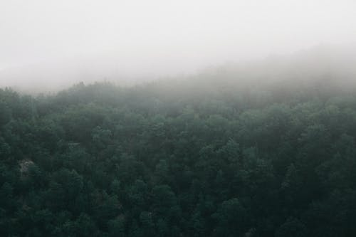 Drone view of spacious verdant woodland with tree peaks covered with dense mist on cold gloomy weather
