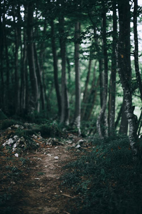 Narrow footpath through green thick forest