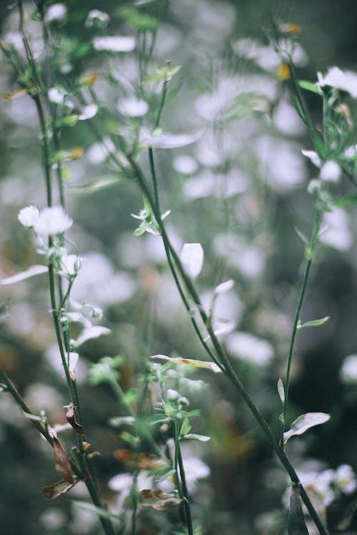 Blühende üppige Pflanzen, Die In Der Natur Wachsen