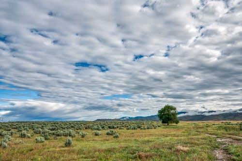 Plants and tree on meadow under shiny cloudy sky