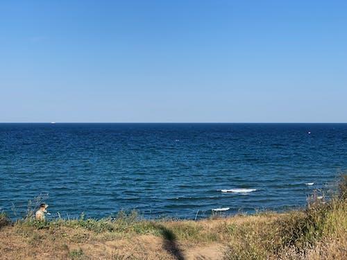 Rippling blue sea near grassy shore