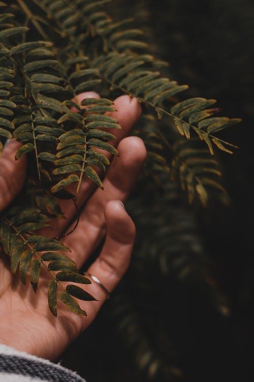 Gratis arkivbilde med berøring, blad, blader, blomstret