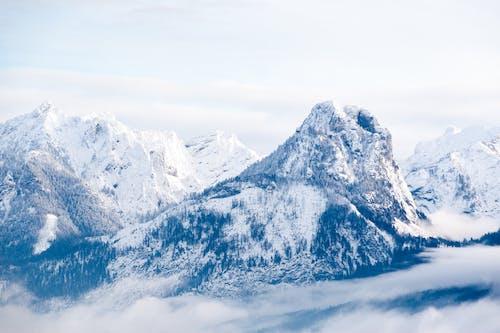 Immagine gratuita di acqua, alberi, alpino