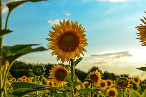 Photos gratuites de agriculture, brillant, campagne