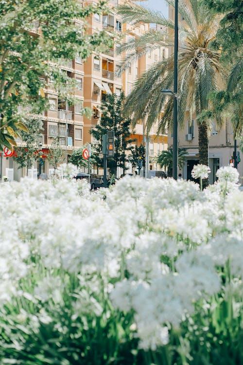Ilmainen kuvapankkikuva tunnisteilla avoin alue, kasvit, kasvu