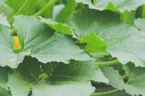 Ilmainen kuvapankkikuva tunnisteilla iso, kasvit, kasvu