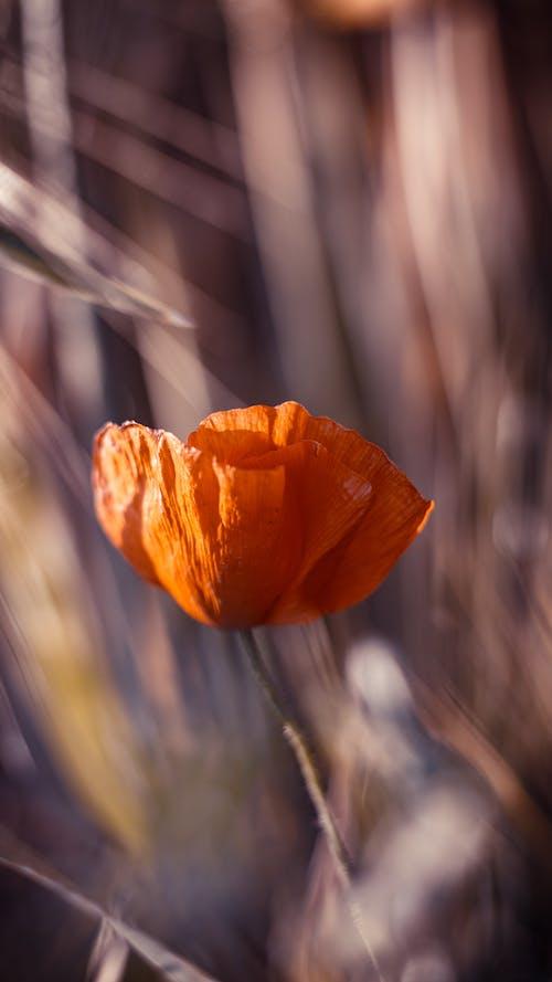 Free stock photo of beautiful flower, beautiful flowers, belgium