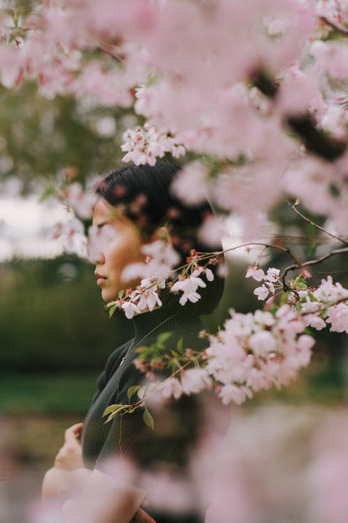 Side view young contemplative Asian female in black outfit standing near blossoming pink cherry tree in spring park