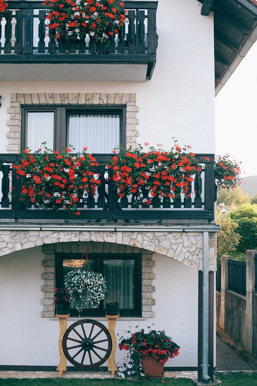 Exterior of modern white apartment building with small balconies decorated with lush red flowers on peaceful sunny day