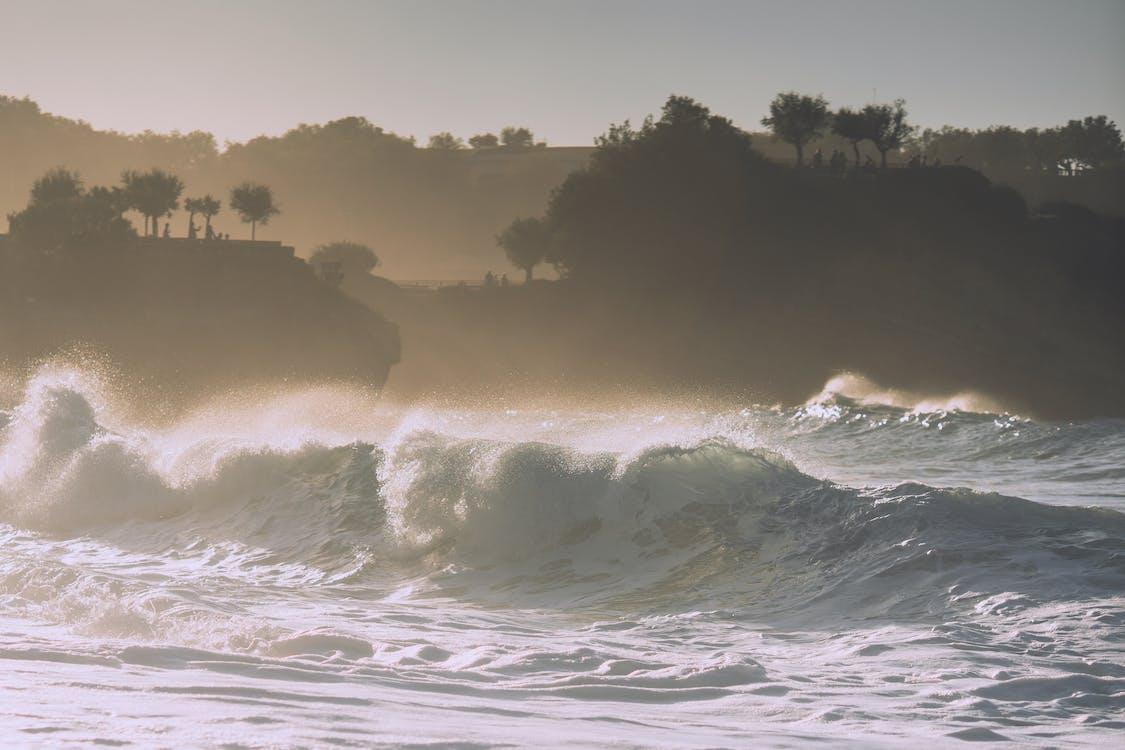 Foamy wavy water of ocean splashing near bushy shore with trees under cloudless sky