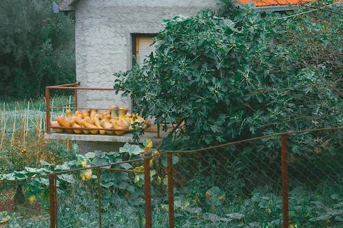 Pumpkins and green plants in garden
