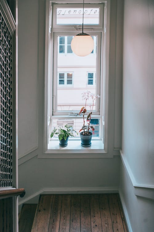 High angle of fresh plants in pots placed on windowsill under lamp of staircase in apartment house