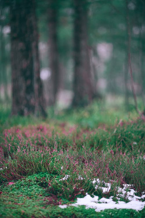 Green grass and wildflowers in forest