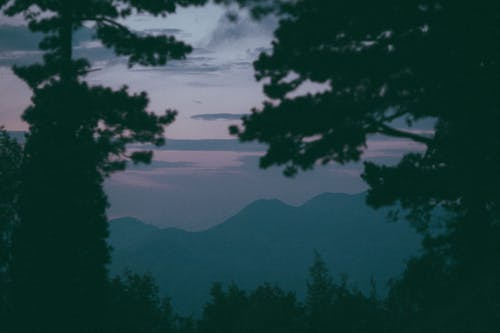 Mountain range surrounded by trees at sunset