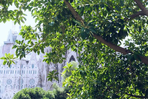 Green foliage on tree against old Catholic cathedral