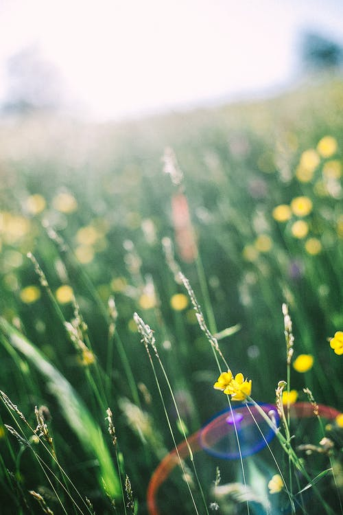 Blooming wildflowers growing in green meadow