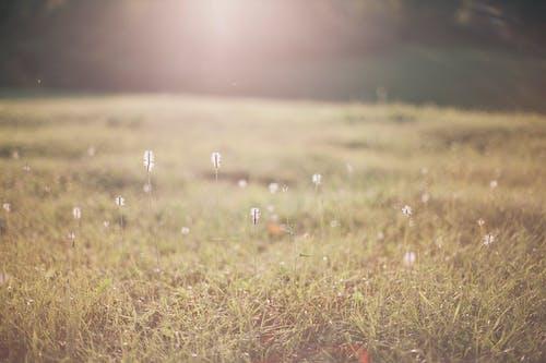 Grass field growing in nature in sunlight