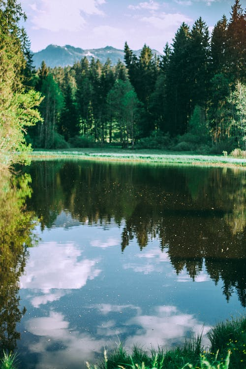 Amazing scenery of calm pond with pure water surface located in green woods