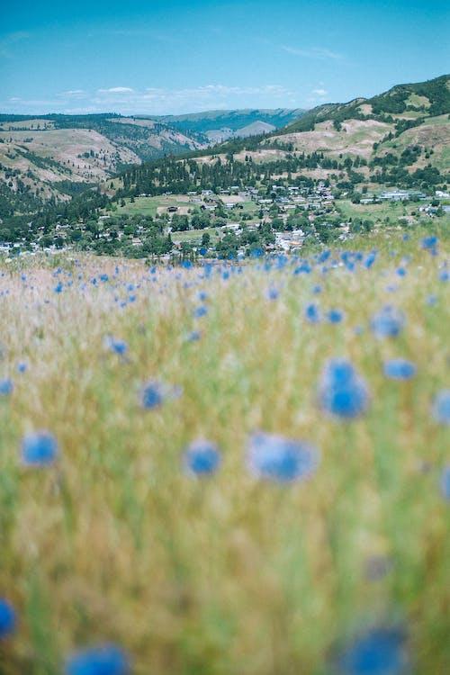 Blooming flowers against village in highlands