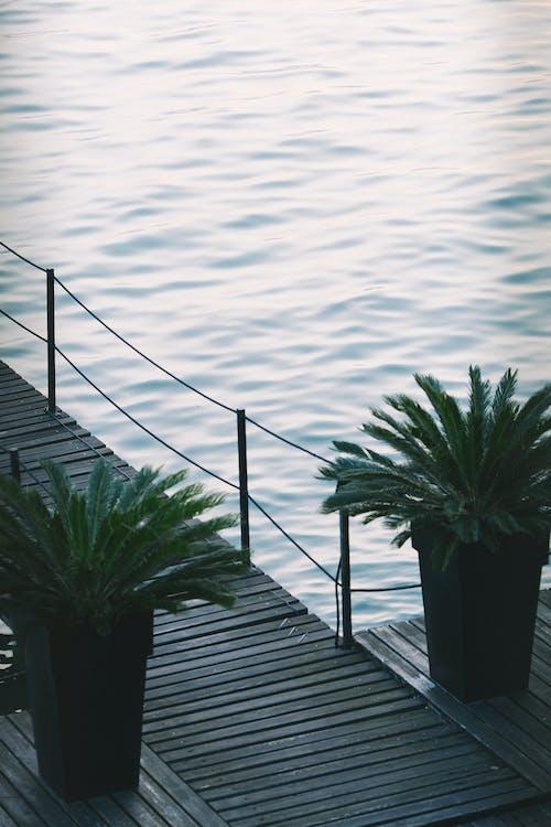 木码头旁边的绿色棕榈树