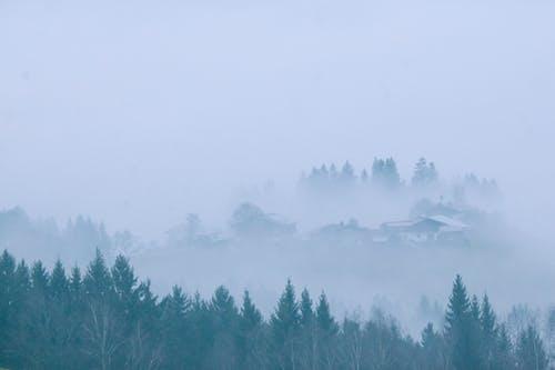 Foggy settlement near coniferous trees