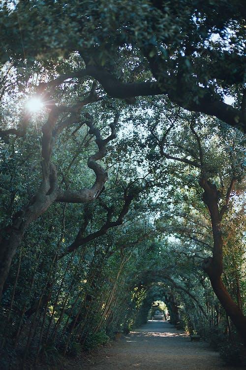 Pathway between trees in daytime