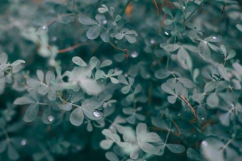 Lush foliage of bush with water drops
