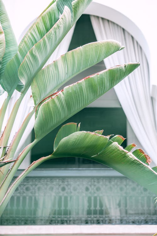 Green palm leaves growing in yard of villa