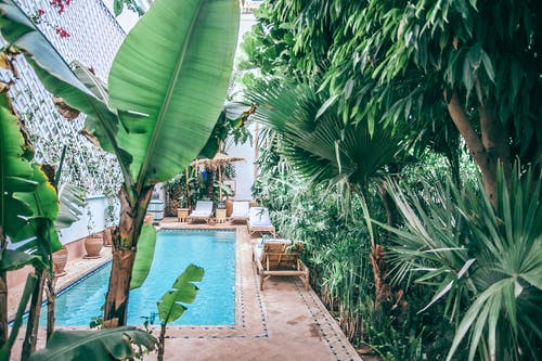 Green tropical plants with lush foliage growing around swimming pool at terrace of hotel