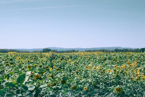 綠色和黃色的花場