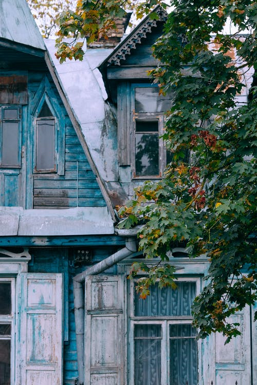 Blauw Houten Venster Met Groene Bladeren
