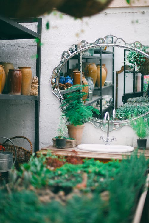 Mirror in silver ornamental frame above wash basin in household outbuilding near lush potted plants in daylight