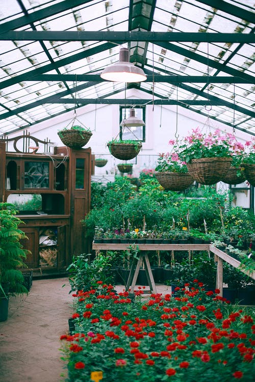 Huge hothouse with potted flowers and plants located around wooden dresser