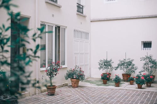 House decorated with potted flowers and plants