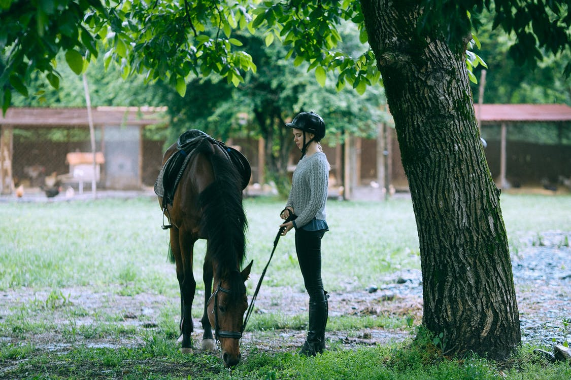 Side view of young female equestrian wearing black helmet carrying harness of brown purebred horse standing in paddock and eating grass