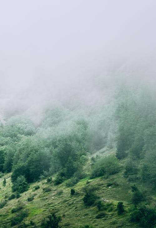 Picturesque view of thick fog on slope of hill with lush coniferous trees and green grass lawns