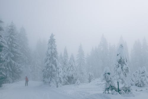 Anonymous traveler walking through winter snowy forest