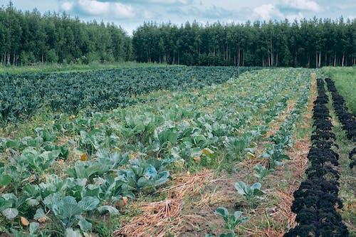 Fotos de stock gratuitas de abundancia, agricultura, agronomía