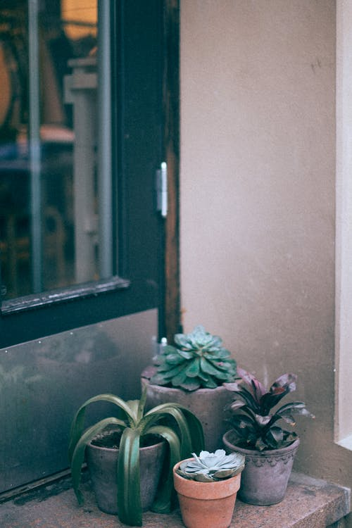 Assorted potted plants on sill of house