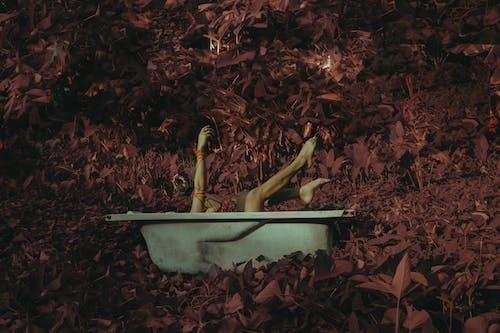 Free stock photo of bathtub, covid 19, Covid-19, crawling plants