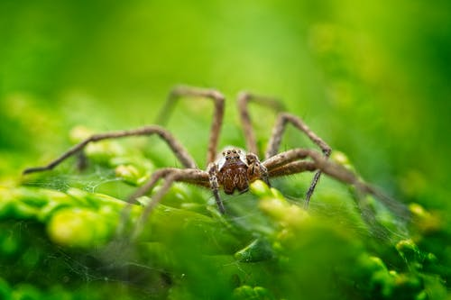 Photos gratuites de arachnide, araignée, brouiller, chevelu