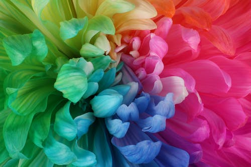 Gratis lagerfoto af rainbow blomst