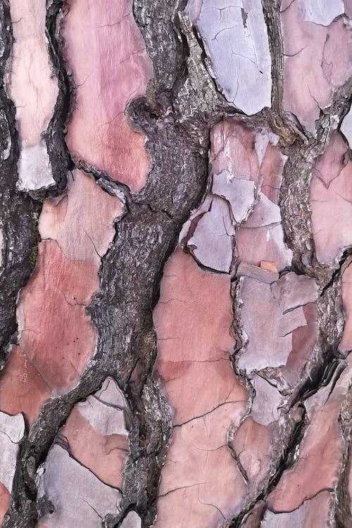 松の木, 樹皮, 細部の無料の写真素材